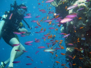 scuba diving with a family of fish