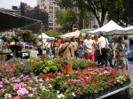 NYC Farmers Market