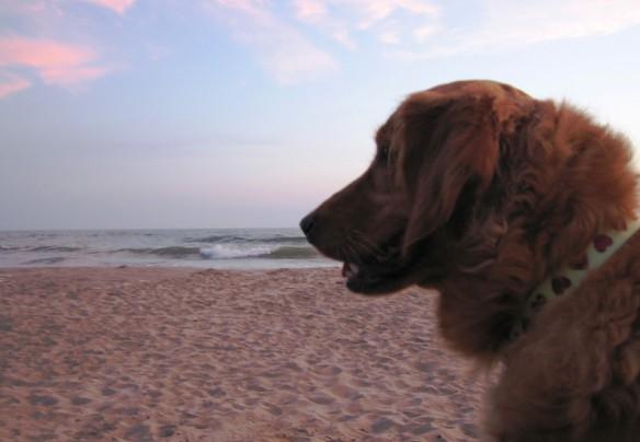 dogs love the beach!