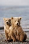 Bear Cubs, Alaska