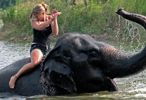 Elephant Riding Fun!