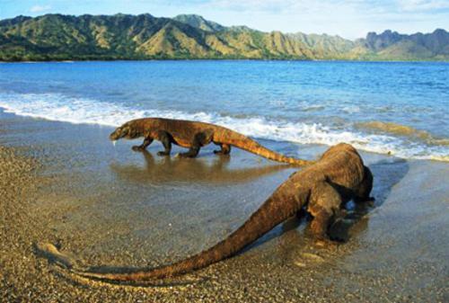 Komodo Island National Park, Indonesia